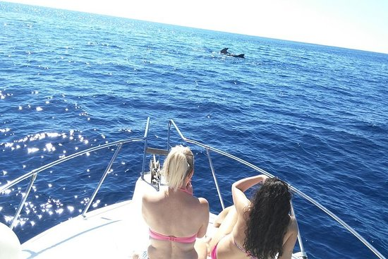 3-Hour Whale and Dolphin Watching in Tenerife