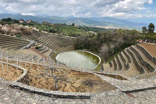 Wijnbelevenis Etna