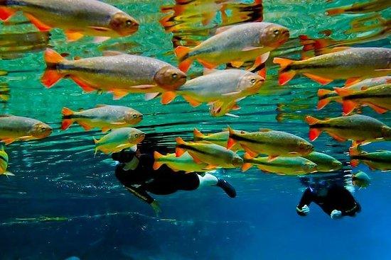 Skip the Line:Recanto Ecologico Rio da Prata Ticket including Trail...