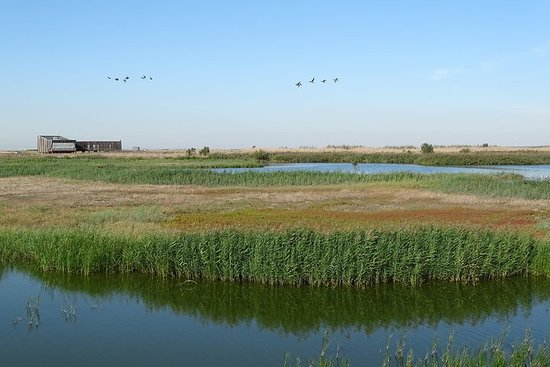 Private Bird Watching in the Tagus Estuary Nature Reserve