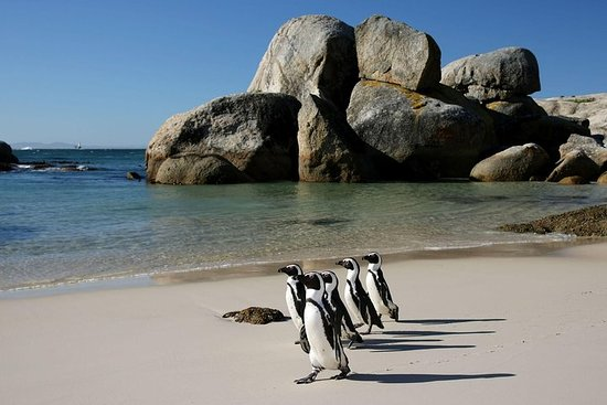 Penguin Encounter Boulders Beach ...