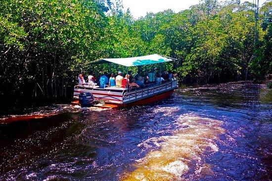 Black River Safari * YS Falls...