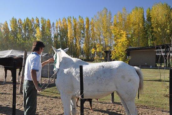 Full day, horseback, food, wines and tour Potrerrilos Mendoza