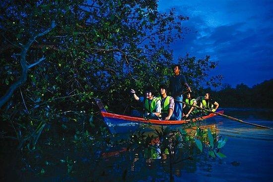 Tour delle lucciole di Kuala Selangor