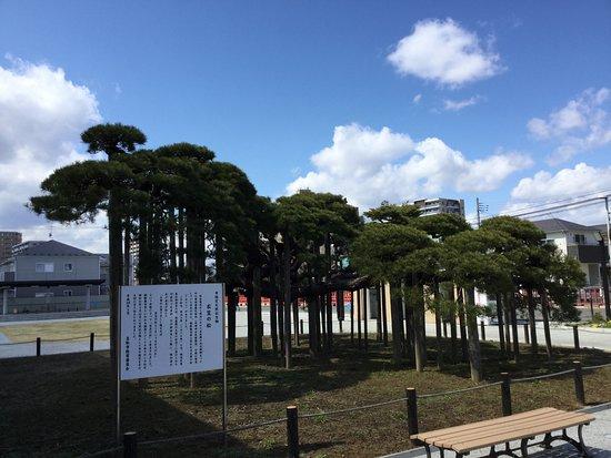 Kinugasa no Matsu
