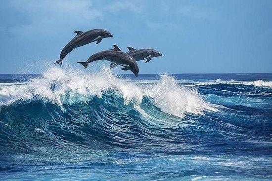 Ricerca dei Delfini