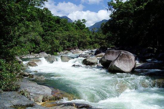 Forêt tropicale de Daintree, Cape...