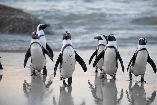 私人海狗和企鵝之旅