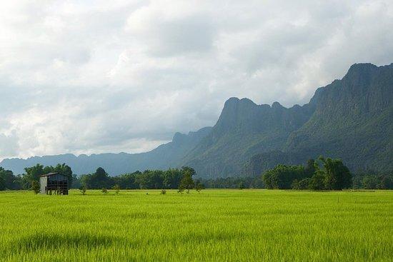 Halv dagers risopplevelse fra Luang...