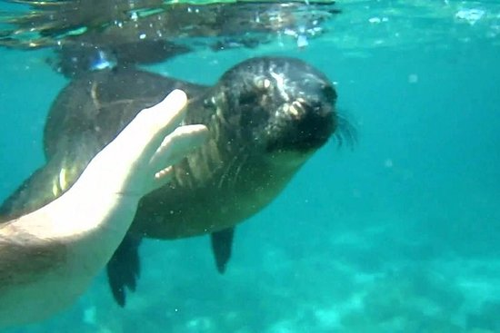 Snorkeling with Sea Lions in Punta Loma...