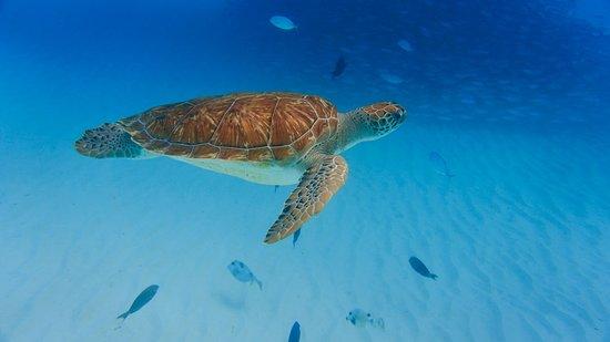 Klein Curacao Adventure Day Trip Fotografie