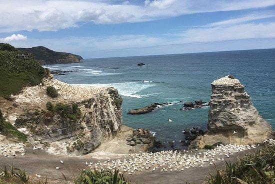 Wunderschöne Naturtouren Auckland...
