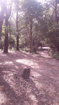 Caminos en el bosque