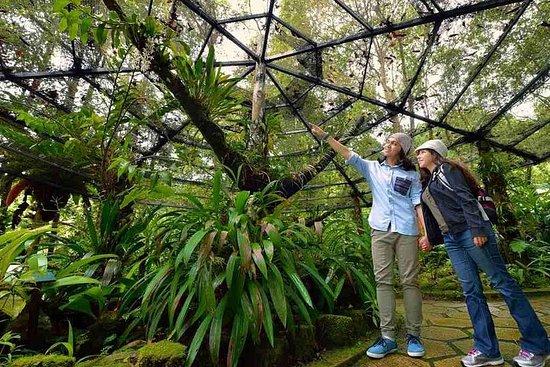 Parc Kinabalu et visite des sources...