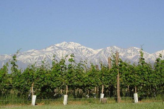 Maipú Wines and Flavors - Mendoza