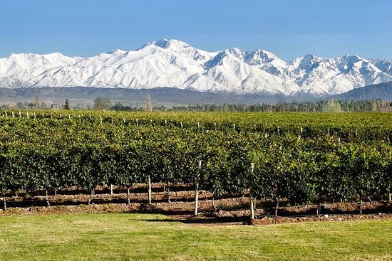 Wine and olive tour in Mendoza