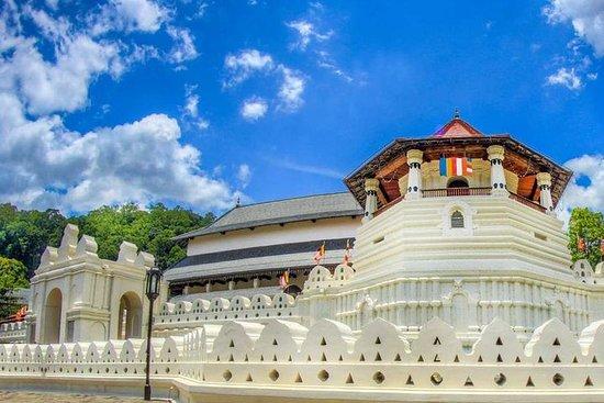 Dagtocht naar Kandy