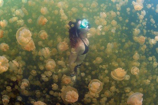 Tour del lago Jellyfish, della Via Lattea, della spiaggia e di Rock