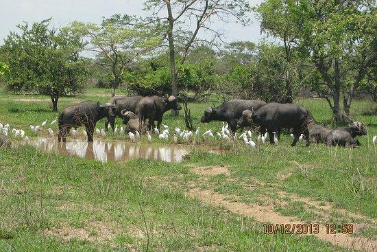 Pacchetto Kanzwa - Tour Safari di 2 giorni al Parco Nazionale di