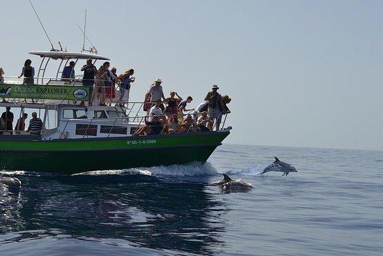 Avistamiento de delfines y ballenas...