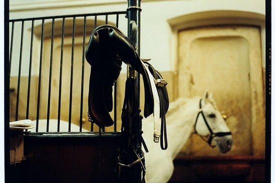 Spanish Riding School Vienna Guided...