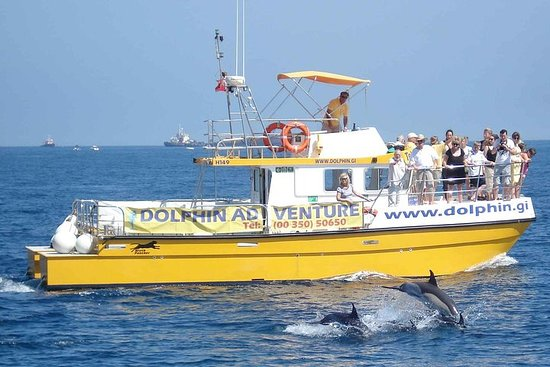 Dolphin Watching Excursion i Gibraltar