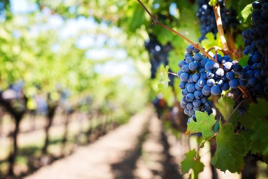 Wein, Essen und die Landschaft...