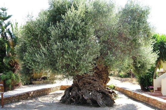 Vino - Cerveza - Tour de cata de aceite de oliva