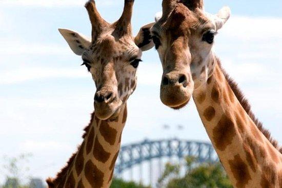 Cruzeiro em Sydney Harbour com...