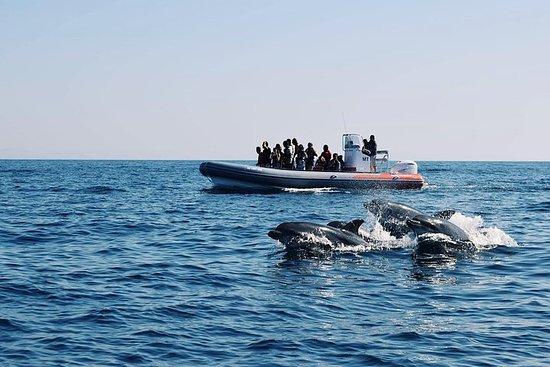 Rib Boat - Delfines y cuevas