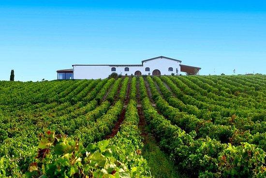 Cagliari: Full Day Wine Experience Privat tur med lunsj