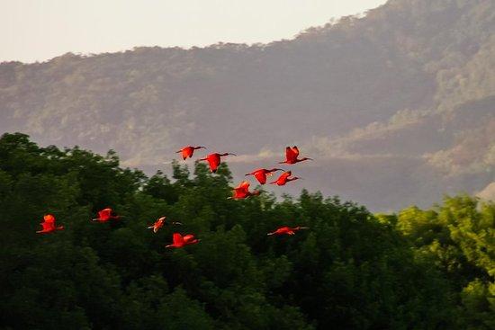 Bird Sanctuaries Tour