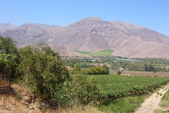 Elqui Valley Full Day (Elqui Valley + Mamalluca Observatory)