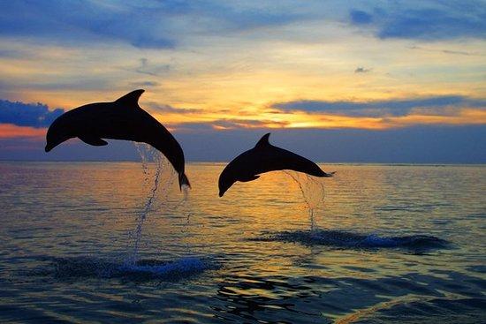 海豚北巴厘岛之旅