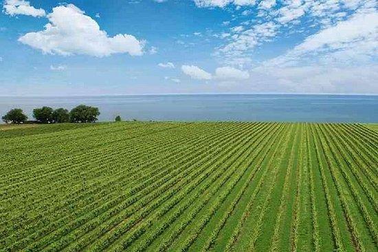 Opplev 20 Valley / Bench of Niagara med Wine Tours of Niagara