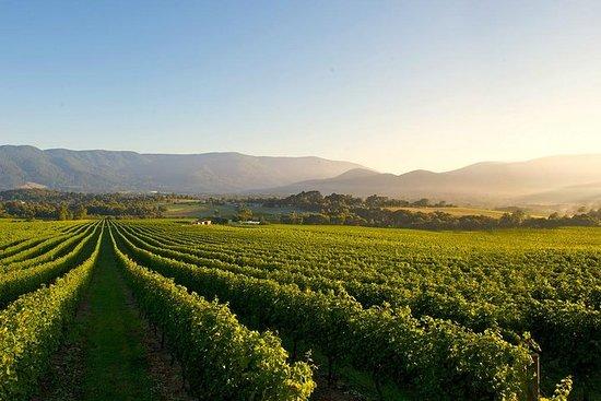 Social Yarra Valley Winery Trip...