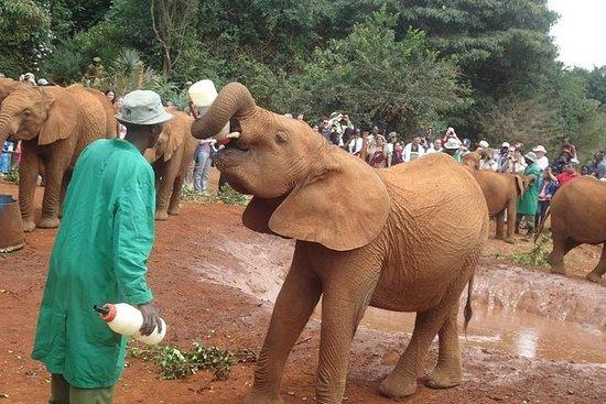 Elephant orphanage och giraffcenter i ...