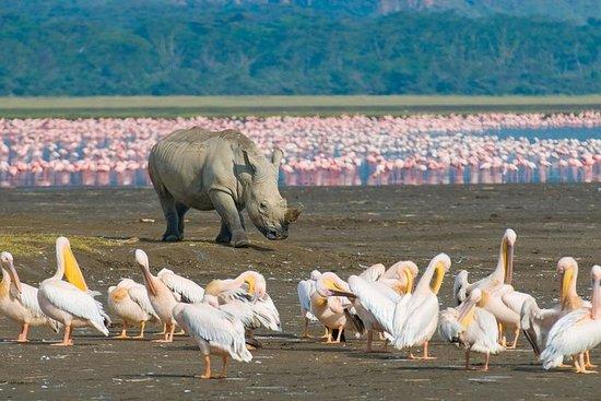 Lake Nakuru National Park: gita di un