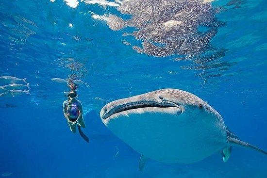 Oslob Whaleshark & Kawasan Falls Tour