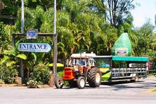 Tropical Fruit World with Wildlife Boat Cruise, Mini Train Ride from...