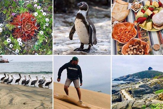 Wild animals, flora, typical Chilean...