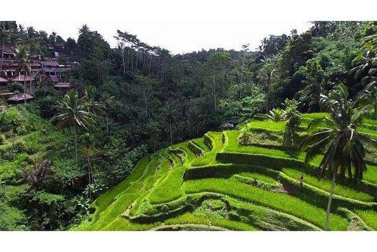 Visite sur le terrain de riz Jati luwih