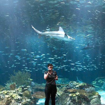 Shedd Aquarium (Chicago) - 2020 Lo que se debe saber antes ...