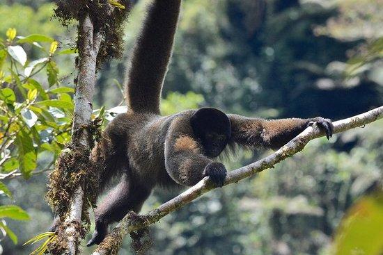 Manu雨林秘鲁之旅