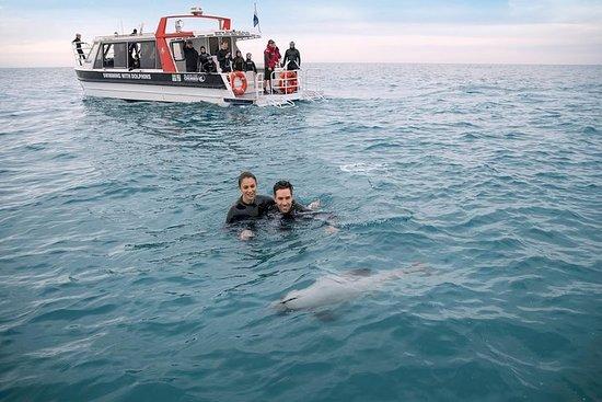 Zwemmen met wilde dolfijnen in Akaroa
