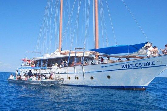 斐濟群島和Snorkel全日鯨魚游輪包括海灘燒烤午餐