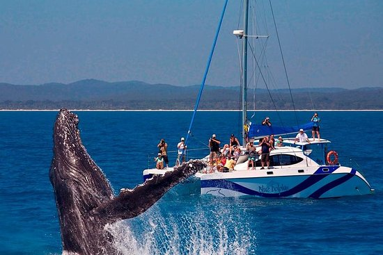 Blue Dolphin Small Group Hervey Bay Whale Watching Cruise