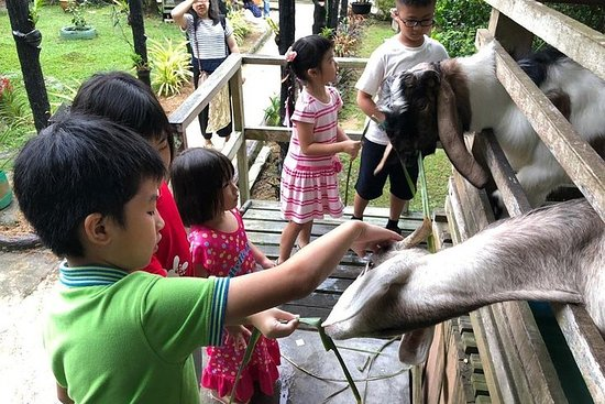 Johor Day Tour - Lasertag, Eco Farm, Go Kart [Car]