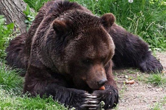 从布拉索夫到熊熊保护区,拉斯诺夫要塞和布兰城堡的私人之旅