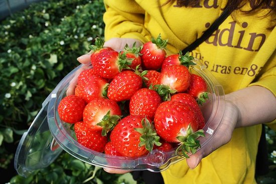 Day Trip:Strawberry picking,Nami Island,Petite France,The garden of...